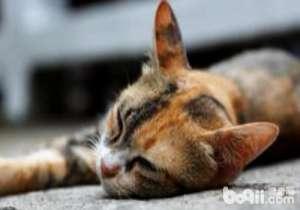 猫身体检查的方法-猫咪常见病